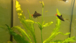 Selling some of my aquarium plants and fish