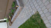 COMPLETE LANDSCAPING & HANDYMAN SERVICES