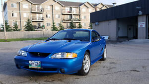 Gorgeous and rare SVT Cobra