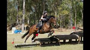 Regrettable sale, lovely bay thoroughbred! North Maclean Logan Area Preview