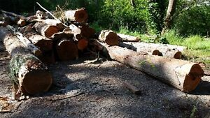 Firewood and Milling Logs for Sale