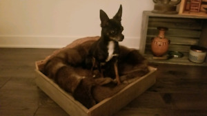 Dog bed - for small dog