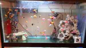 40 Gallon Tank Package