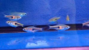 AFK REEF'S FRESH WATER FISH AND INVERTS