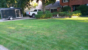 Weekly Lawn Service (Affordable, Reliable and Professional)