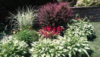 Aménagement paysager, horticultrice