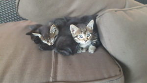 Kittens ready for a loving home