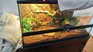 Ball python  Cambridge Kitchener Area image 1