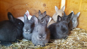 Young Bunnies