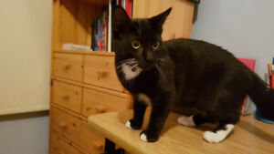 7 months old black male kittens to be rehomed