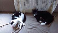 2 Neutered Cats - Free to good home!