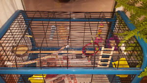 Bird cages with accessories