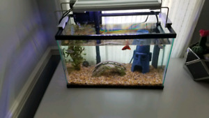 5 gallon tank with filter, heater and deco