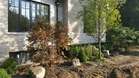 Landscaping services  Twin Pines