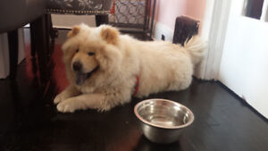 Doggy Hotel - In Home Boarding Available