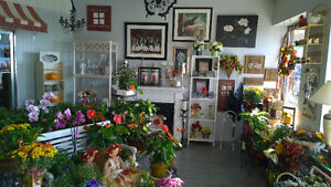 NEW PRICE For Flower & Gift Shop London Ontario image 9