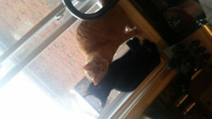 Free male cats 1 year old