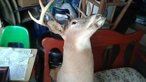8 POINT BUCK MOUNTED PROFESSIONALLY