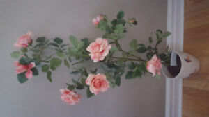 Decorative rose plant . Price is negotiable
