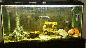 Aquarium with stand and fish