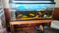 SOLD PPU - 55 gallon fresh water tank aquarium