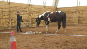 Horse traning Course