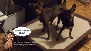 Home no cage Daycare & Boarding for Small Dogs