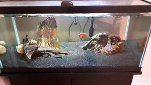 40 Gallon Tank with Stand