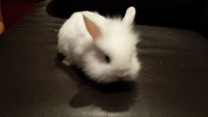 Free rabbits to good home