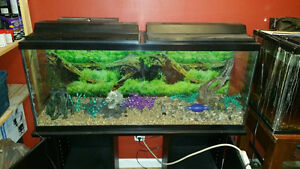 30 and 55 gallon fish tanks