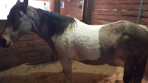 NOUVEAU PRIX! trois cheval pour 1900$