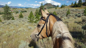 Horse Training and Coaching Available
