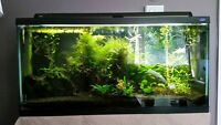 33 Galon Fish tank with tons of quality accessories