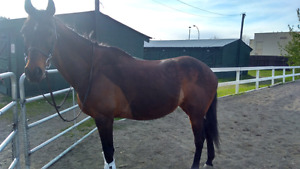 Amazing mare for lease!
