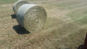 top quality hay 4 sale