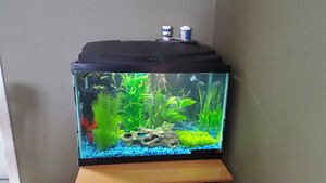 20 gallon tank with fish