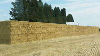 ---Small Square Straw Bales---