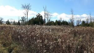 FANTASTIC 47 ACRE PARCEL ON THE EDGE OF TOWN Kitchener / Waterloo Kitchener Area image 1