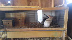 3 bunnies looking for a new home