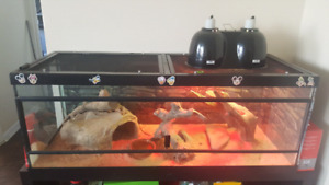Bearded dragon and set up for sale