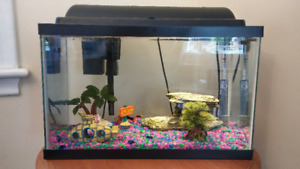 A running 10 gallon Fish Tank with 4 platy fishes