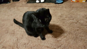 Found two black cats