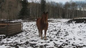 Project Horse For Sale