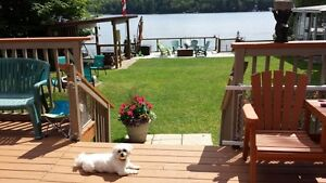 Family Friendly Waterfront Cottage in the Haliburton Highlands