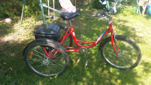 Tricycle adult