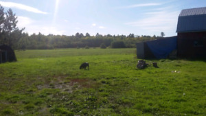 Farm land only  for rent