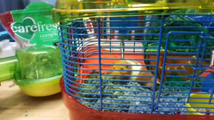 Hamsters and cages