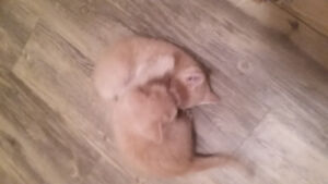 5 kittens looking for christmas homes