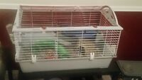 Rats with cage