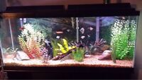 55 gallon fish tank and stand
